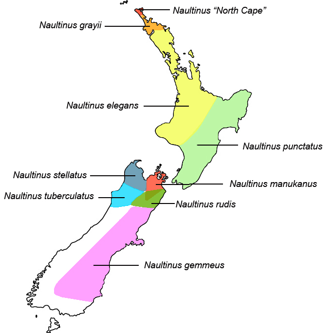 Naultinus distribution map